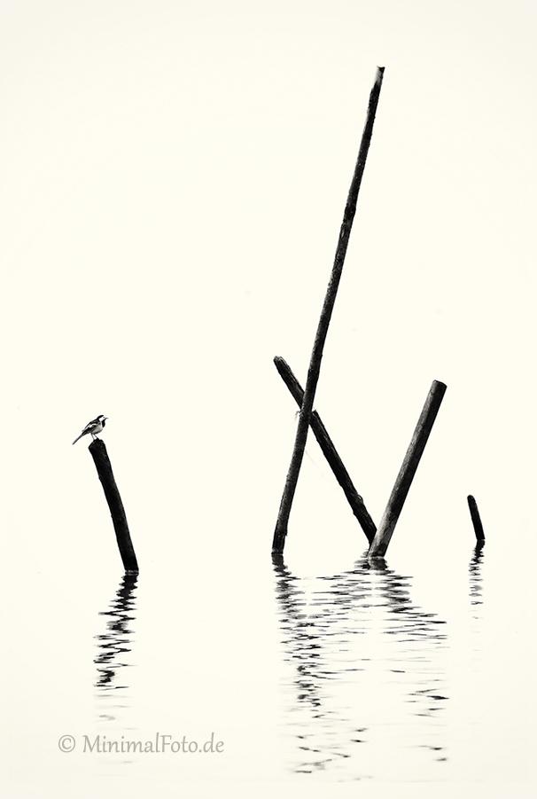 Bachstelze-wagtail-Fisch-Reusen-Stange-vogel-bird-silhouette-Minimalismus-minimalistisch-minimalistic-black-white-schwarz-weiss-2_DSC7019-2-sw