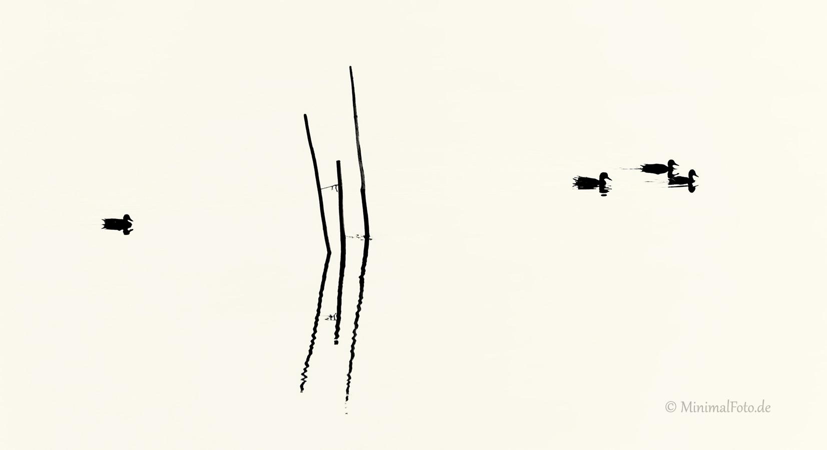 Ente-Stock-mallard-duck-Fisch-Reusen-Stange-vogel-bird-silhouette-Minimalismus-minimalistisch-minimalistic-black-white-schwarz-weiss-AXO1I7205a-sw
