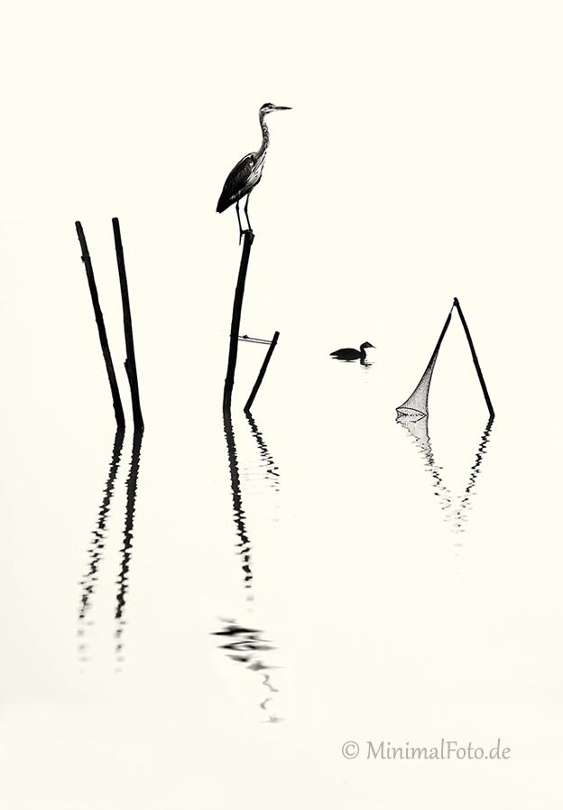 Grau-Reiher-heron-gray-grey-Fisch-Reusen-Stange-vogel-bird-silhouette-Minimalismus-minimalistisch-minimalistic-black-white-schwarz-weiss-A_NIK6001b-sw