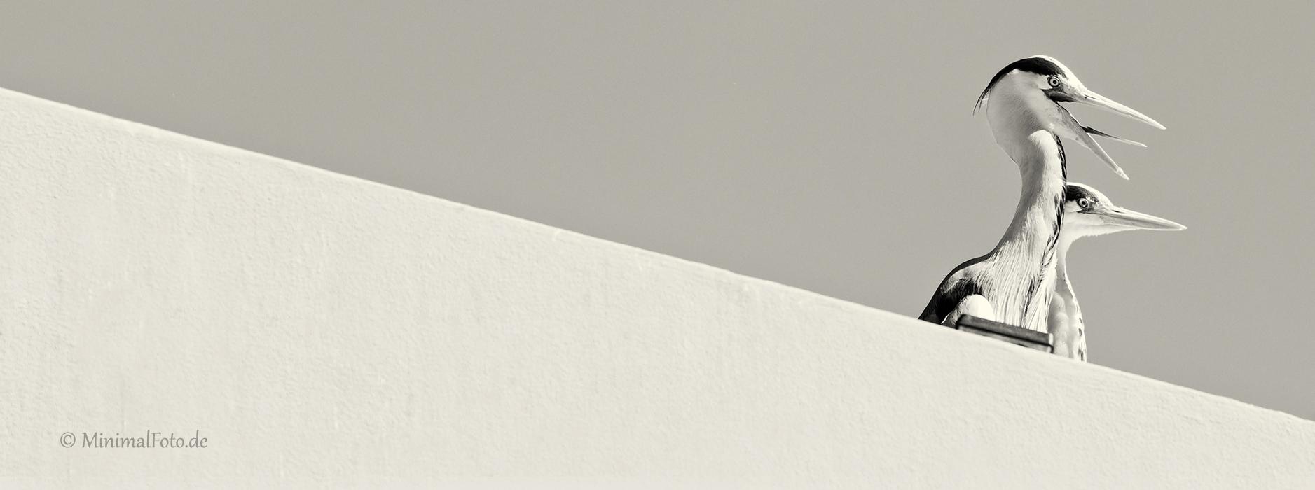 Grau-Reiher-heron-gray-grey-Minimalismus-minimalistisch-minimalistic-black-white-schwarz-weiss-A_NIK500_3633-sw