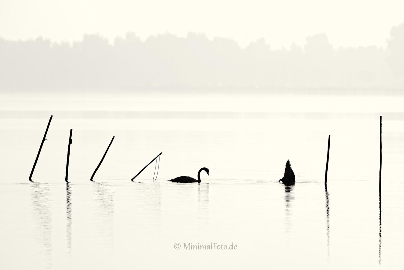 Schwan-Höcker-mute-swan-Fisch-Reusen-Stange-vogel-bird-silhouette-Minimalismus-minimalistisch-minimalistic-black-white-schwarz-weiss-A_NIK6077-sw
