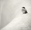 sparrow-bird-vogel-spatz-sperling-Minimalismus-minimalistisch-minimalistic-black-white-schwarz-weiss-2_DSC6801-sw