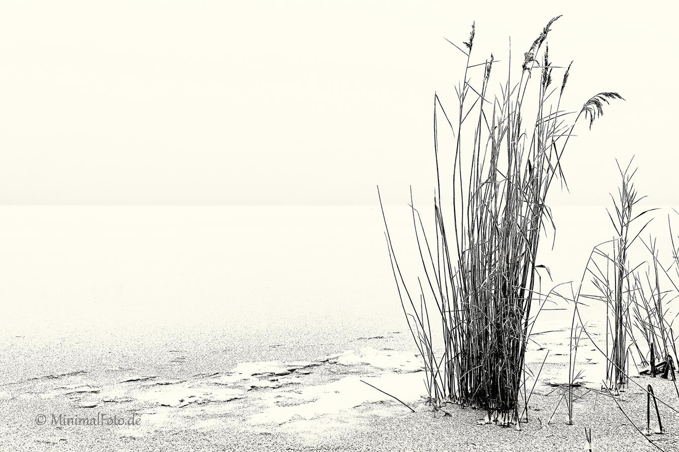 Schilf-reed-roehricht-winter-Minimalismus-minimalistisch-minimalistic-black-white-schwarz-weiss-C_SAM0223-sw