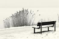 Bank-bench-Schilf-reed-roehricht-winter-Minimalismus-minimalistisch-minimalistic-black-white-schwarz-weiss-B_SAM0471-sw