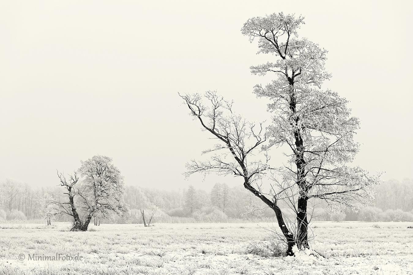 Baum-tree-winter-snow-schnee-Landschaft-landscape-Minimalismus-minimalistisch-minimalistic-black-white-schwarz-weiss-B_SAM0494-sw