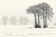 Baum-tree-winter-snow-schnee-Landschaft-landscape-Minimalismus-minimalistisch-minimalistic-black-white-schwarz-weiss-B_SAM0498-sw